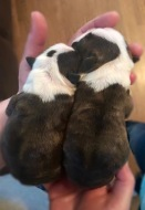 They're so tiny when they're born!