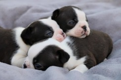 Puppy pile, their favorite napping position.